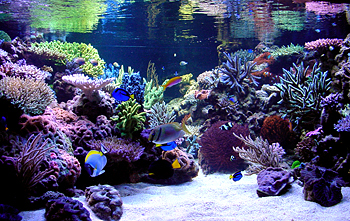 What S The Best Nano Aquascape You Ve Ever Seen General Discussion Nano Reef Com Forums