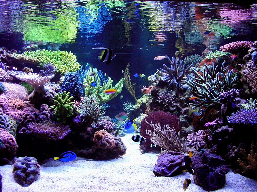 Sick Tank Reef Central Online Community