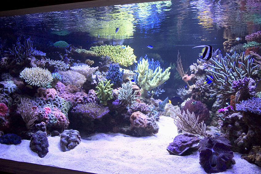 I need ideas for aquascaping. - Page 2 - The Reef Tank